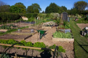 Allotment finally tamed – April 2009