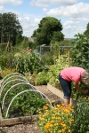 A picture of me on my allotment